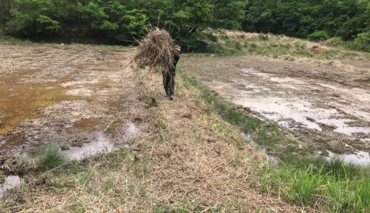 田んぼは治水から