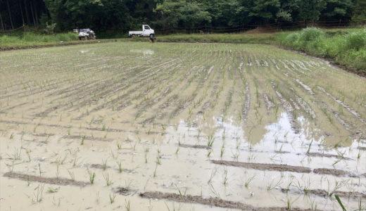 お米の田植え完了