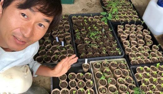 夏野菜の苗を元気にする