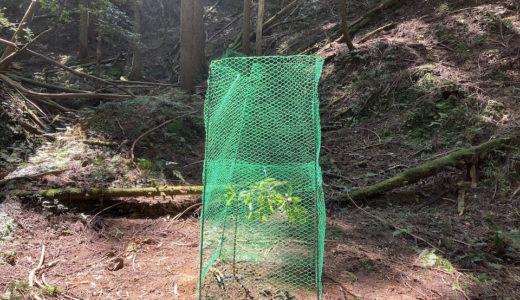植林後の大事な作業