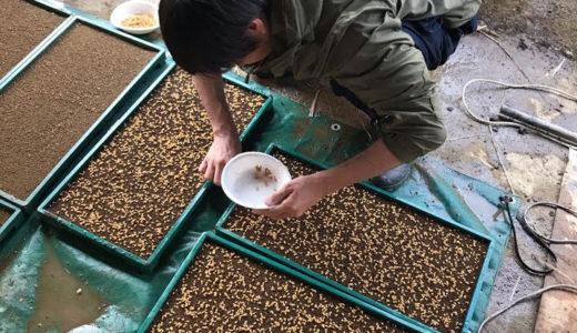 いよいよお米の種まきが始まりました!