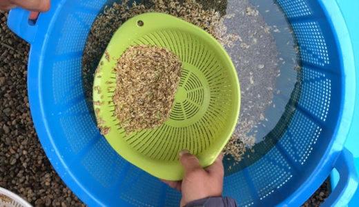 お米の種まきの準備