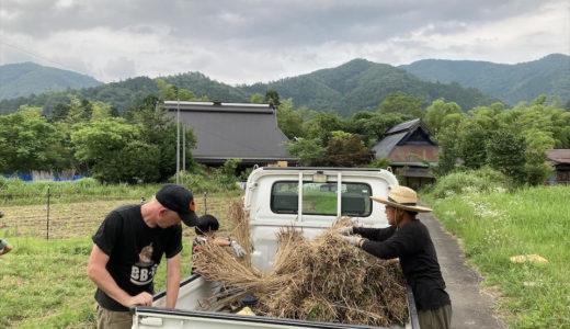 小麦収穫完結